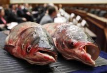 asian carp caught